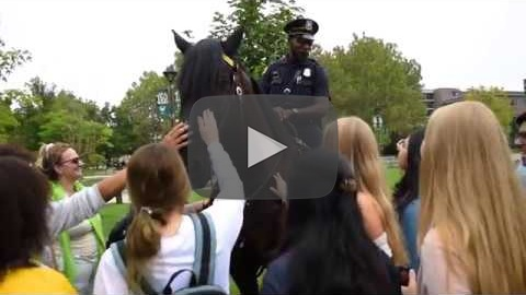 Video of mounted officer and horse